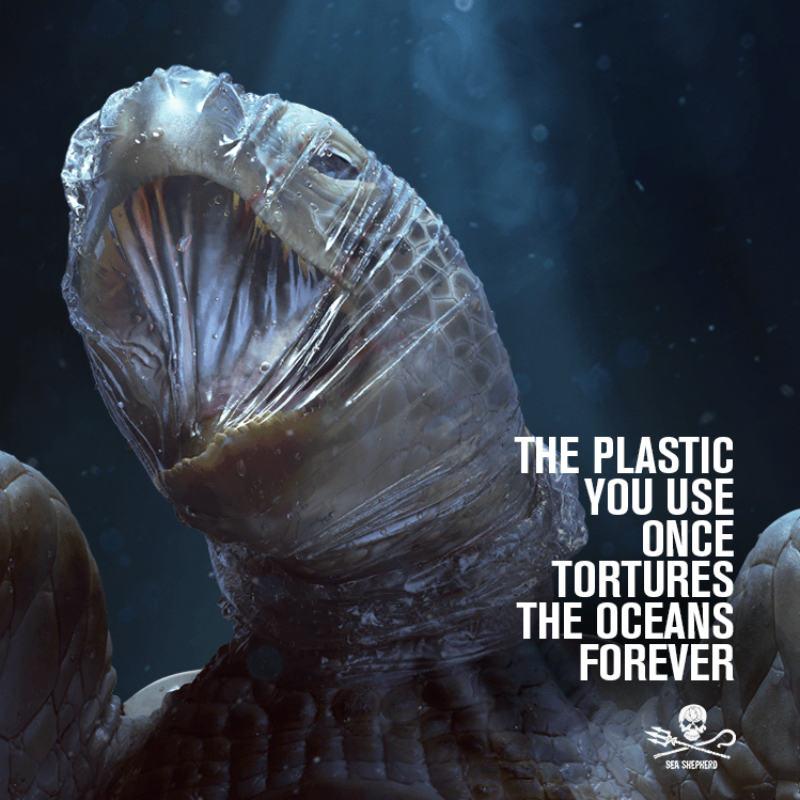 Sea_Shepherd ad